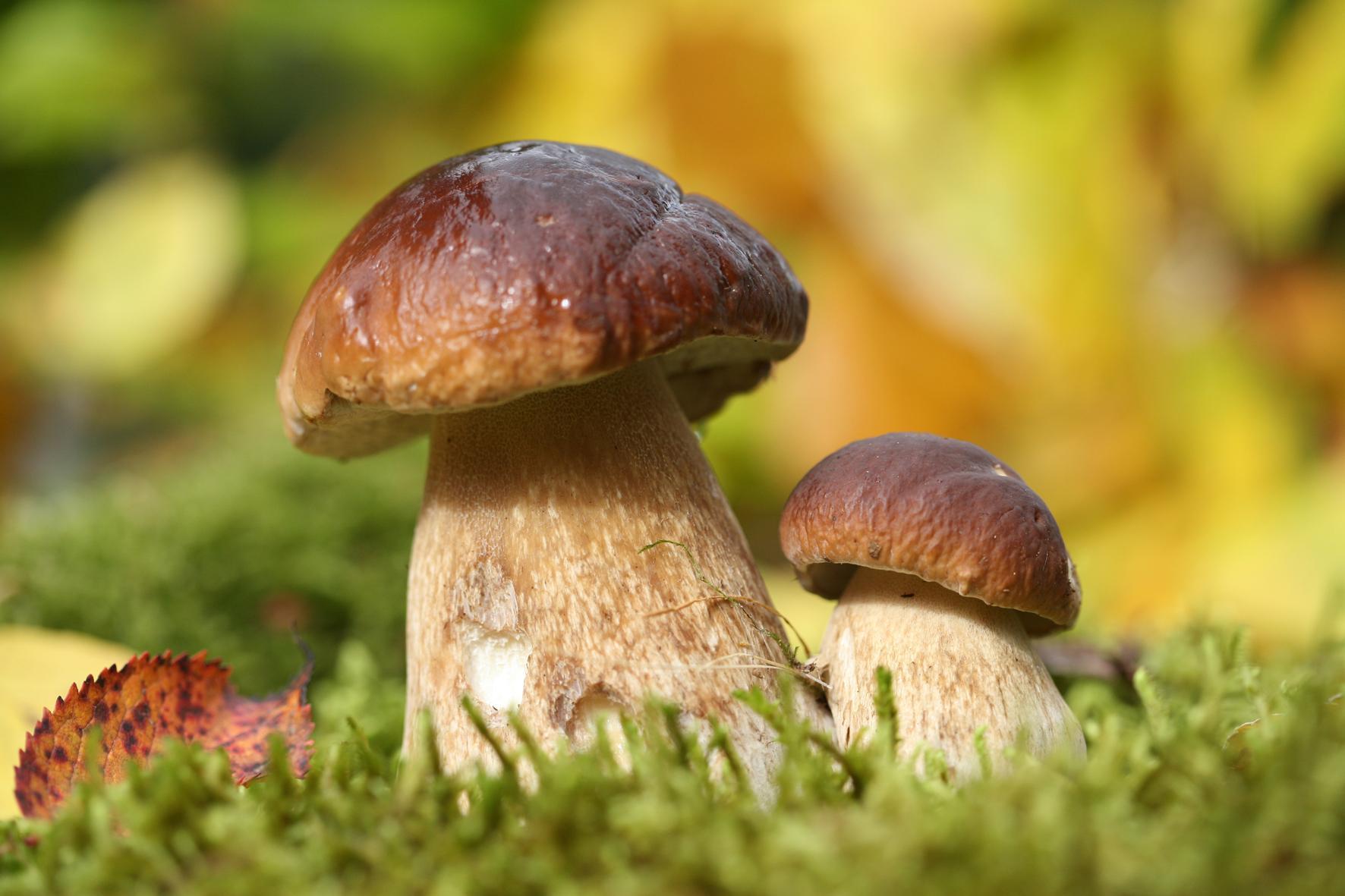 Jacques Marcon, de la forêt aux champignons | Forest Time
