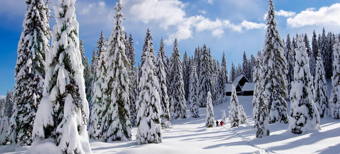 Buying a forest in Québec: Dreaming of a log cabin in Canada