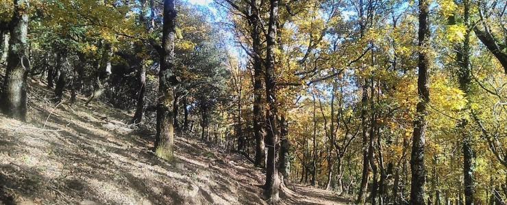 """""""Agir ensemble en forêt"""", un guide foncier original"""