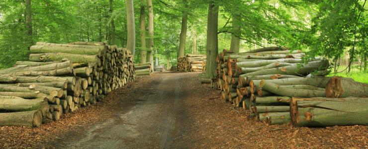 Cahier des charges pour la vente de bois