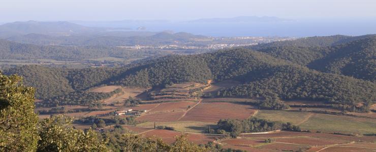 Forêt de production de chêne Liège à vendre dans le département du VAR.