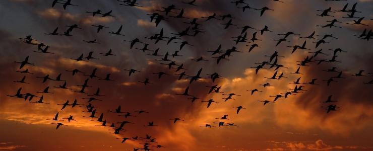 Exonération de taxe foncière en zone Natura 2000 : Les conditions