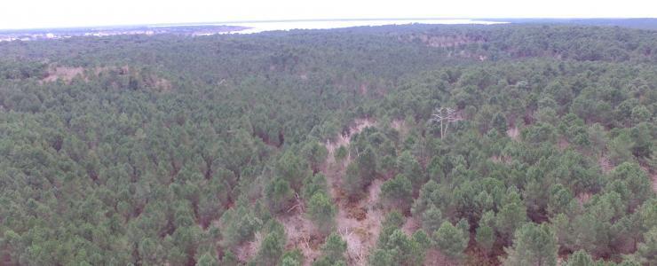 Propriété Forestière au bord de l'Océan Atlantique