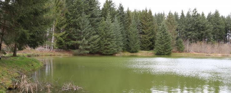 Forêt de production et de loisirs dans l'Allier