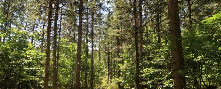 Savez-vous que les forêts se vendent?