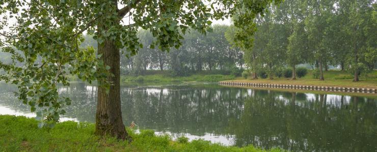 55 Meuse - Les forêts reconstituées offrent une belle diversité d'essences