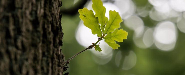 Bourgogne Franche-Comté – A vibrant wood-based economy