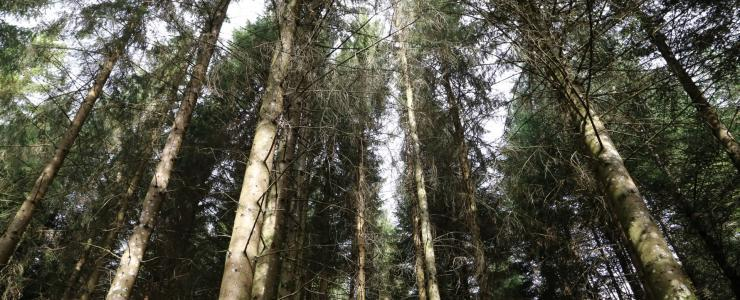 Production forest in Cantal