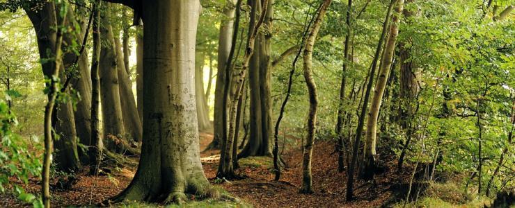 Treenox : une place de marché digitale pour produits forestiers