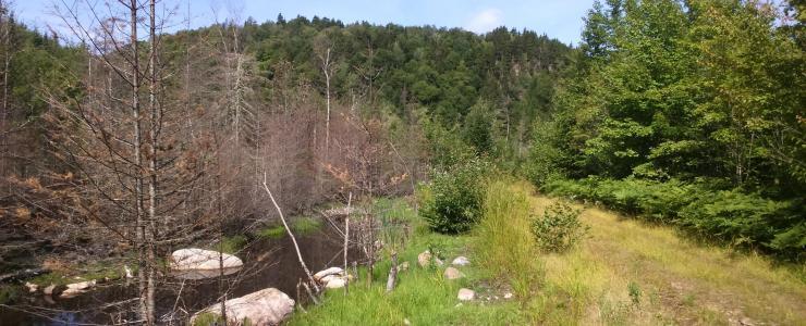 Maciço florestal perto da cidade de Quebeque