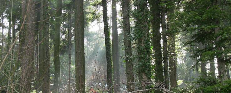 Propriété Forestière en Ardèche