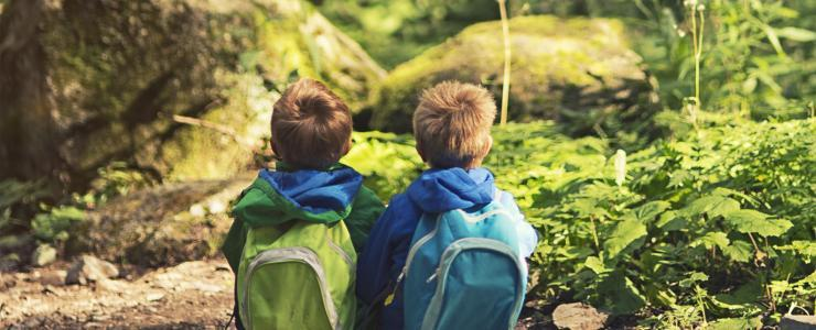 La Forêt au cœur des préoccupations environnementales