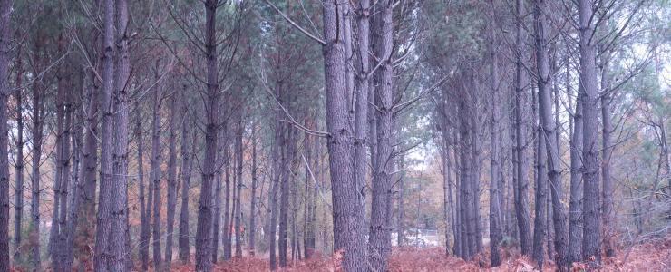 Forêt de Production en Gironde