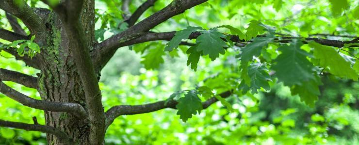 Mobilisation du chêne en forêt privée dans le Sud-Ouest de la France