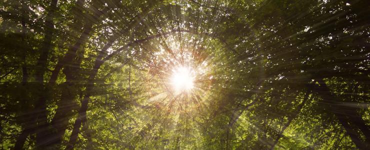 Sylviculture et changement climatique