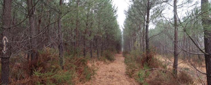 Propriété Forestière en Charente