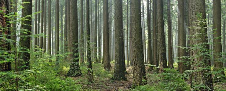 Commercialiser des gros bois résineux
