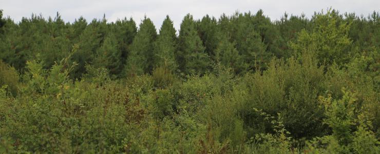 Floresta de Produção em Dordogne