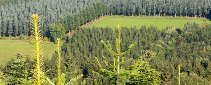 Plantações Florestais