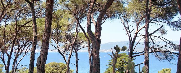 2A Corse du Sud - Un taux de boisement élevé