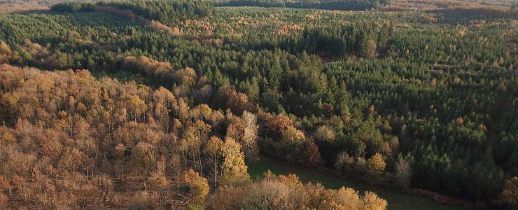 Le marché de la forêt en France : les chiffres