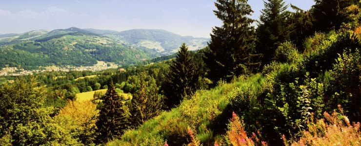 88 Vosges - Qualité et abondance des boisements