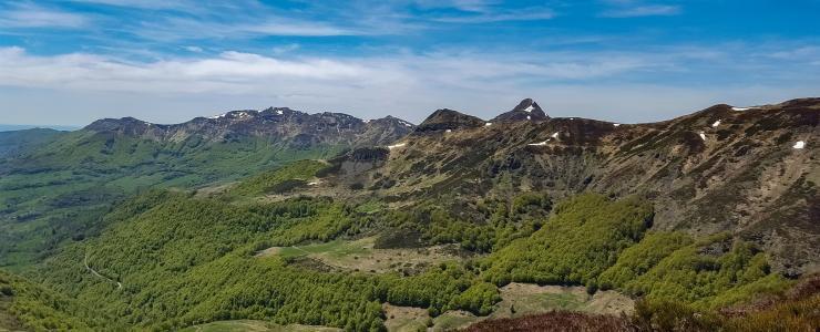 15 Cantal - Des forêts de résineux de bonne qualité