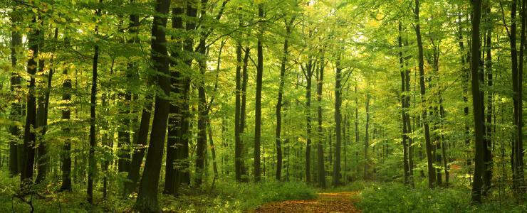 95 Val d'Oise - La forêt privée est rare