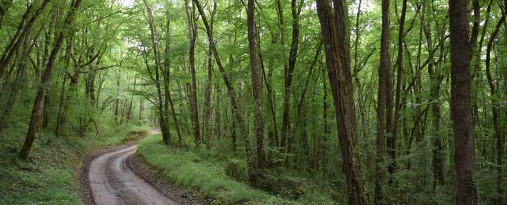 Forêt de Production dans le Sud-Ouest