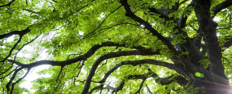 87 Haute Vienne - Des forêts composées de chênes et de châtaigniers
