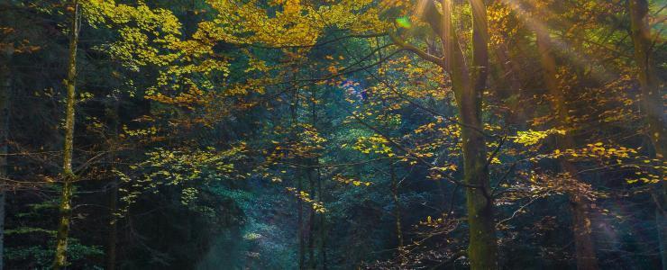 La forêt, l'or vert