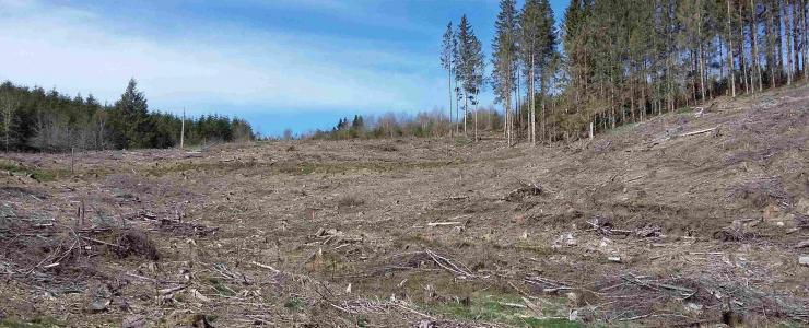 Les enjeux écologiques majeurs  des forêts françaises