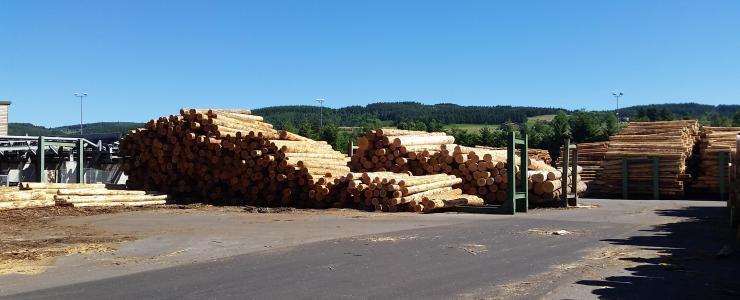 La futaie régulière : un mode d'exploitation forestière prédominant