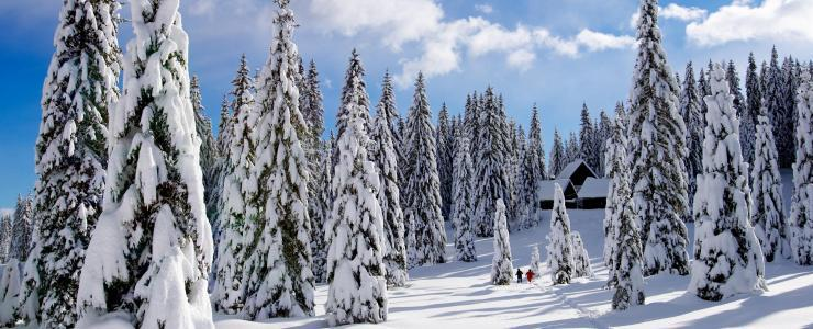 Buying a forest in Québec: Dreaming of a log cabin in Canada?