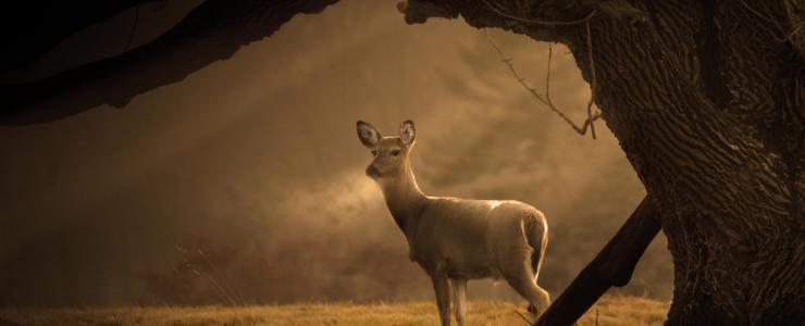 41 Loir et Cher - Des forêts réputées pour la qualité de leur chasse