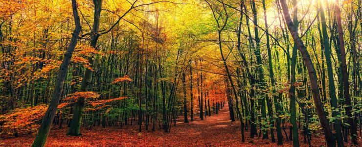 Forêts : bénéficiez du report d'imposition sur les plus-values mobilières