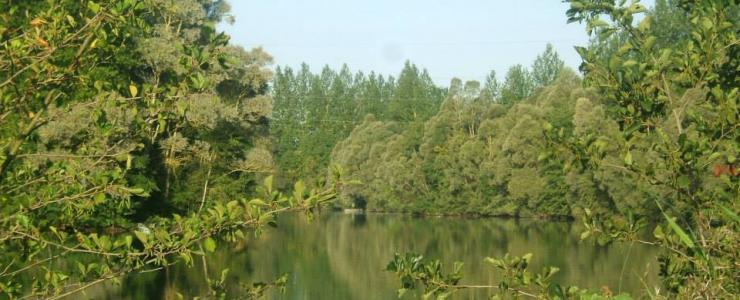 Acheter et rentabiliser son étang