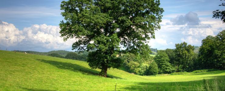 58 Nièvre - Département premier producteur de chênes en France