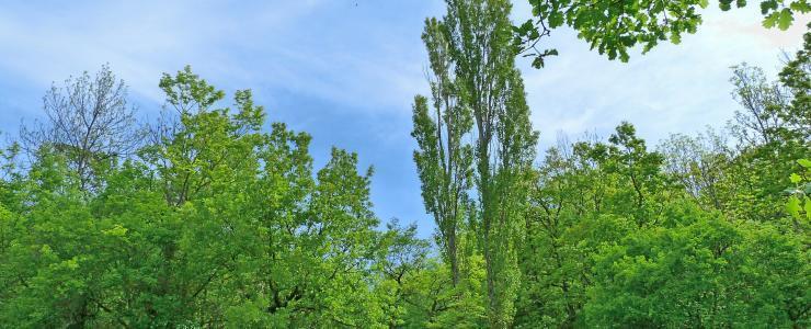 89 Yonne - Une production de chênaies de grande qualité
