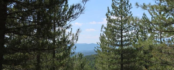 Forêt de Production en Ardèche