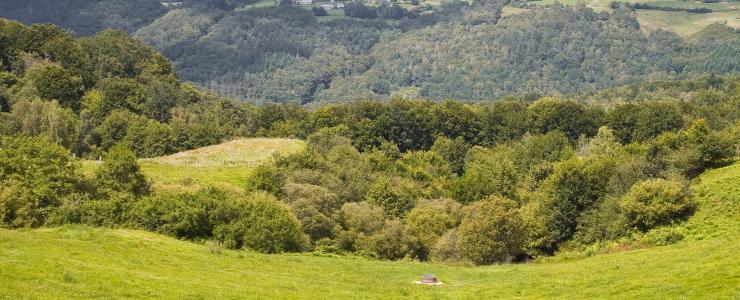 19 Corrèze - Des forêts remarquables par leurs massifs de résineux