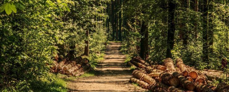 La desserte d'une propriété forestière