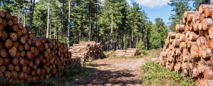Wood sales from private forests