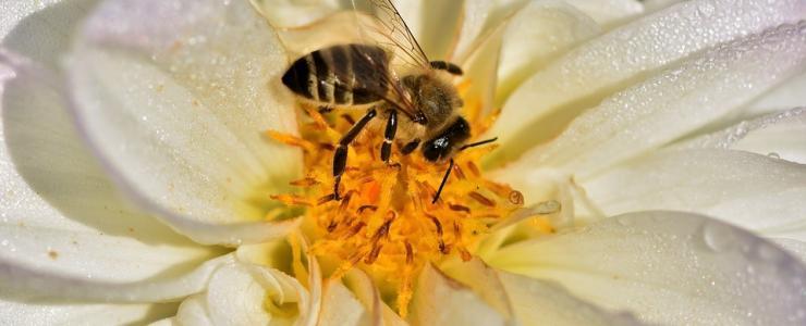 Le temps des abeilles