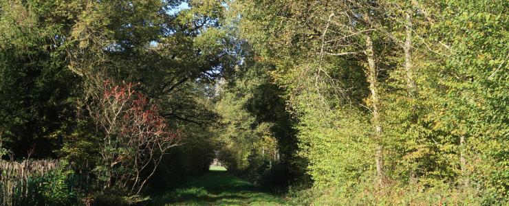 Chênaie dans le département de la Saône-et-Loire