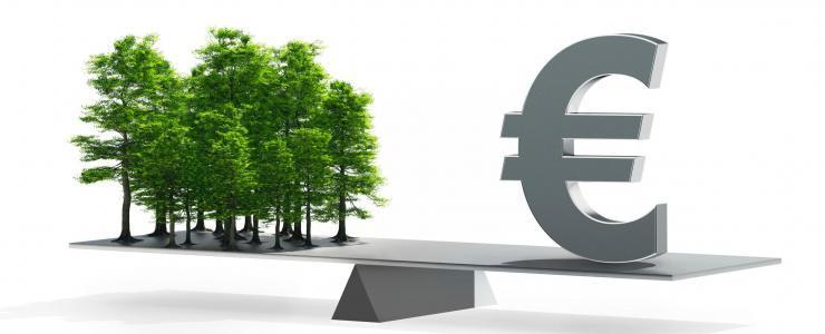 Quelle place pour l'épargne forestière?