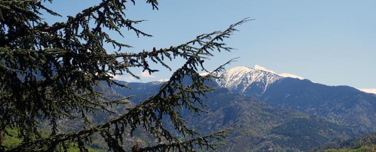 66 Pyrénées Orientales - Un relief très marqué impactant l'exploitation des forêts