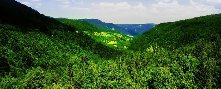 Grand Est - Forests characterized by the variety and quality of their species