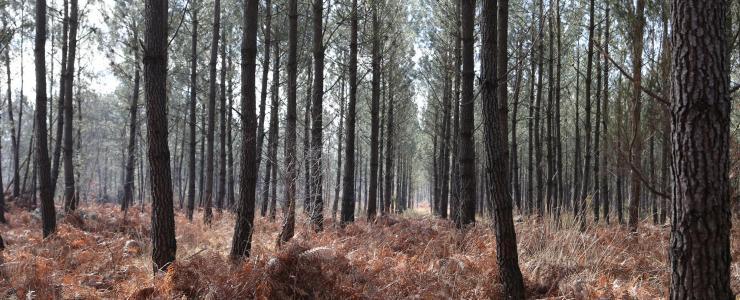 Forêt en Charente-Maritime