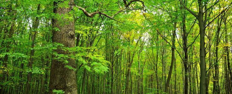 Le massif forestier Champardennais